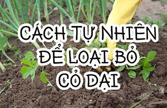 5-Cach-Tu-Nhien-de-Loai-Bo-Co-Dai-Ra-Khoi-Vuon-Cua-Ban