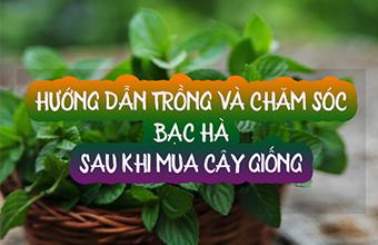 Huong-Dan-Cham-Soc-Cay-Bac-Ha-Khi-Mua-Ve