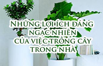 Nhung-Loi-ich-dang-Ngac-Nhien-Cua-Viec-Trong-Cay-Trong-Nha