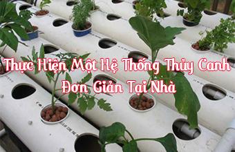 Thuc-Hien-Mot-He-Thong-Thuy-Canh-don-gian-Tai-Nha